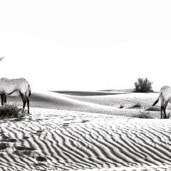 두바이 사막 보존 지역 여행 사진