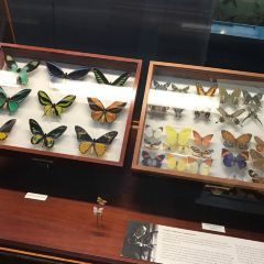 American Museum of Natural History User Photo
