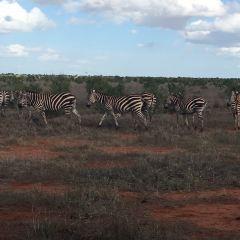 Tsavo National Park User Photo