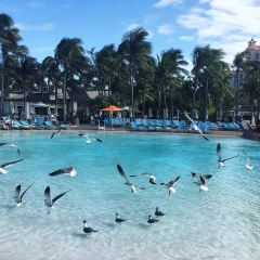 Atlantis Paradise Island User Photo