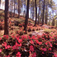 大木林下花園用戶圖片