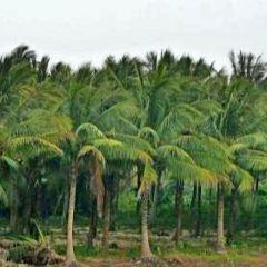椰子島用戶圖片