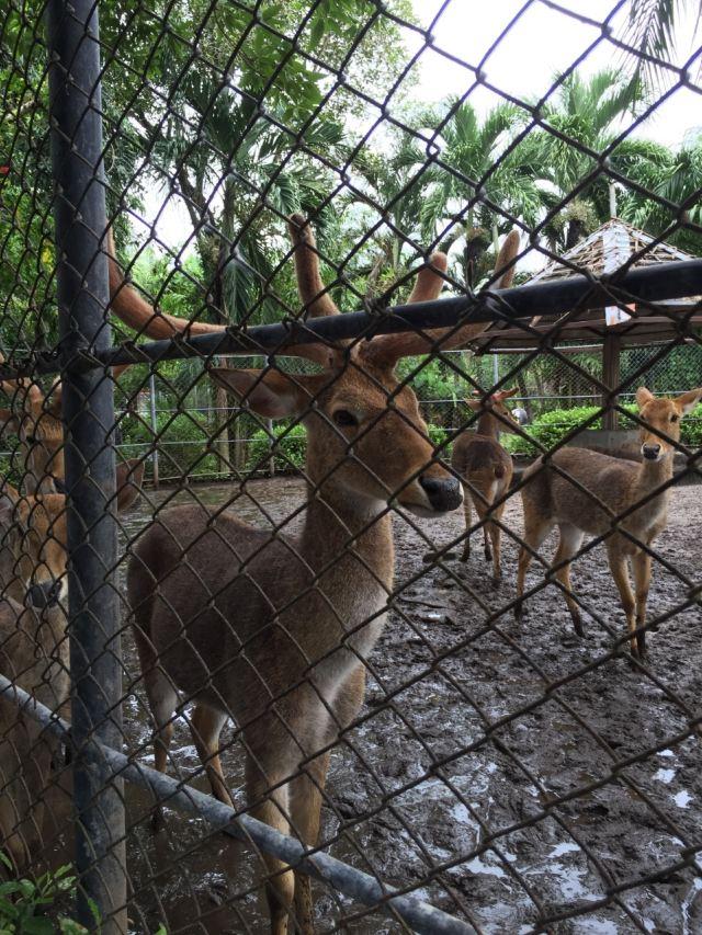 푸껫 동물원
