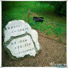 徐志摩詩碑用戶圖片