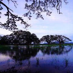 尼甘布瀉湖用戶圖片