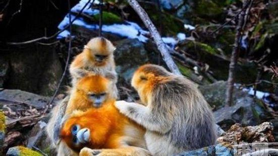 白河金絲猴自然保護區
