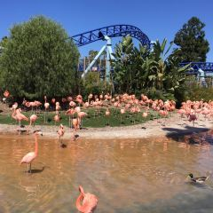 SeaWorld San Diego User Photo