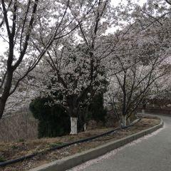 Sakura Mountain Scenic Spot User Photo