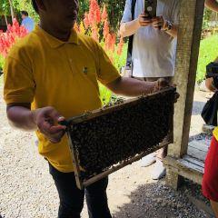 Bee Farm User Photo