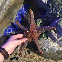 Hippocampus Fantasy Aquarium User Photo