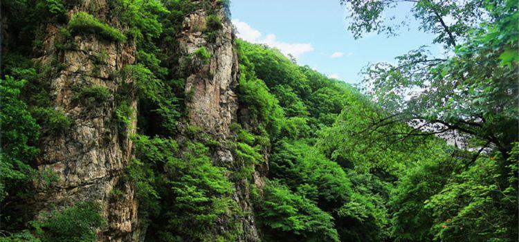 Yulongxi Primeval Forest Park1