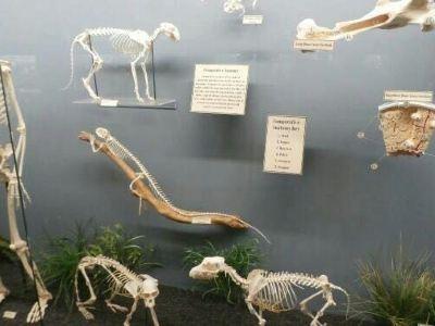 骨學博物館