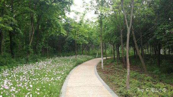 Urban Ecological Forest Park