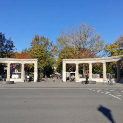 麥吉爾大學用戶圖片