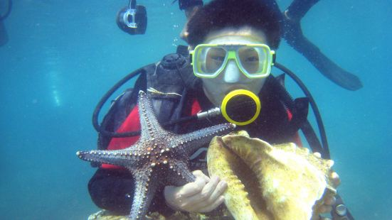 산호초 스노클링