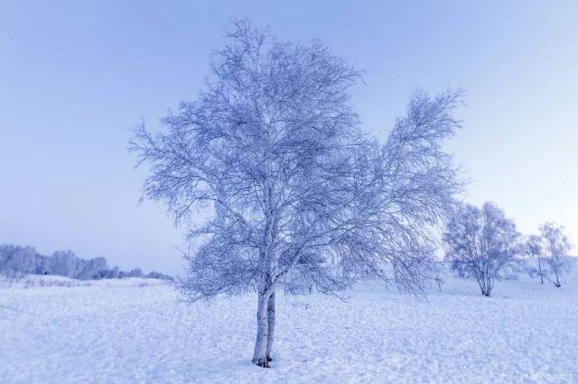 大雪時節仲冬將至,你的家鄉下雪了嗎?