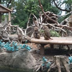 Chimelong Safari Park User Photo