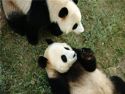 Panda Pavilion