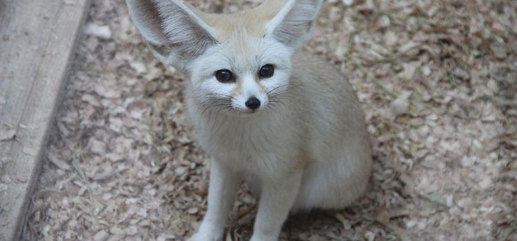 耳廓狐展區
