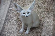 耳廓狐展区-南通-AIian