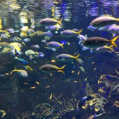 Osaka Aquarium Kaiyukan User Photo