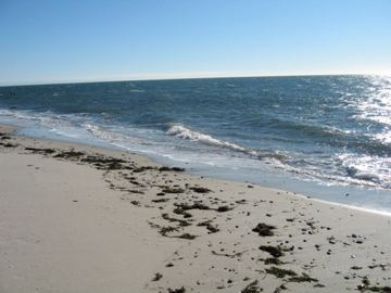 Dowse's Beach