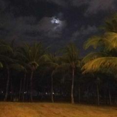 Sanya Tropical Rainforest Square User Photo