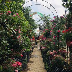 張家花園用戶圖片