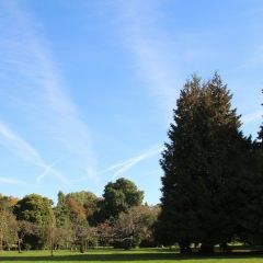 Bute Park User Photo