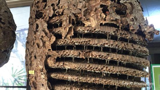 世界昆蟲及自然奇觀博物館