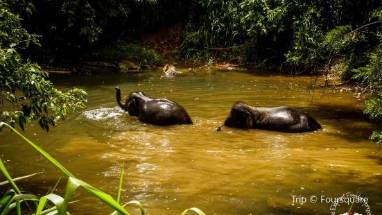 Elephant Freedom Project