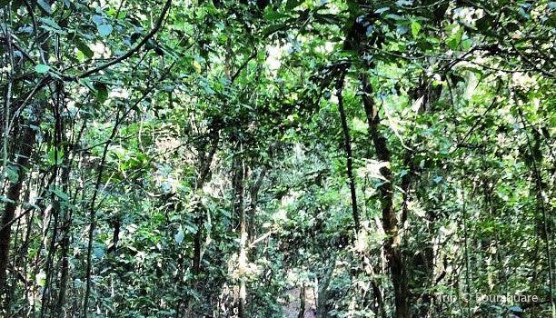 Kakum National Park3