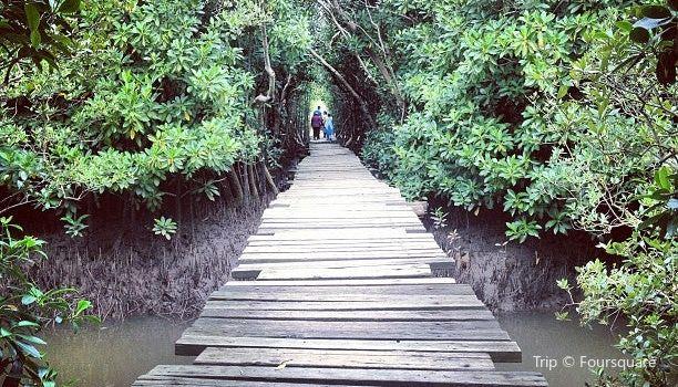 Beachwood Mangroves Nature Reserve3