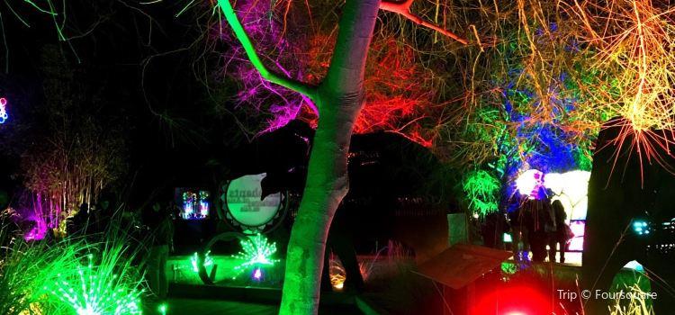 LA Zoo Lights3