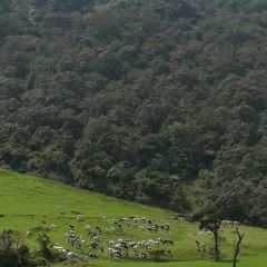 紐西蘭牧場用戶圖片