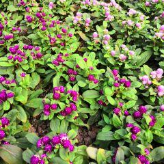 濱松花卉公園用戶圖片