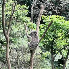 台北市立動物園用戶圖片