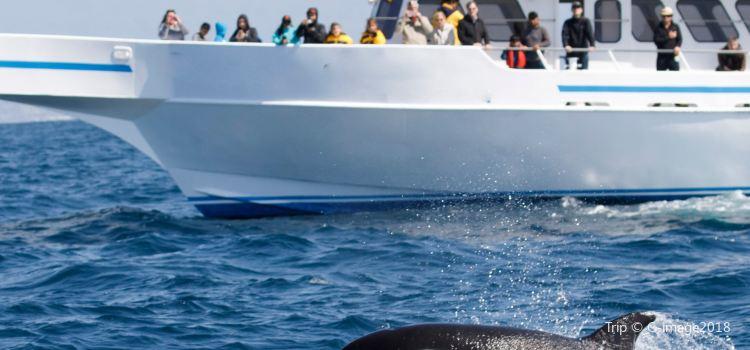 鯨魚觀賞1