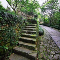 杭州靈隱(飛來峰)景區用戶圖片