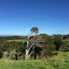Waiau Kauri Grove User Photo