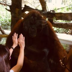 シンガポール動物園のユーザー投稿写真