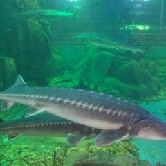 魚展館用戶圖片