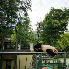 Panda Pavilion  User Photo