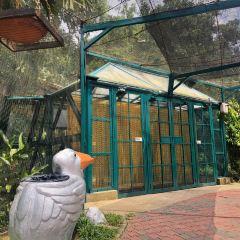 鳥類公園用戶圖片