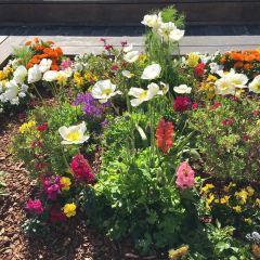 耶爾巴布埃納花園用戶圖片