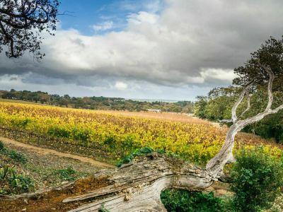 Spier Winery
