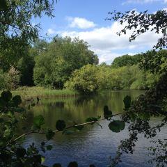 Hampstead Heath User Photo