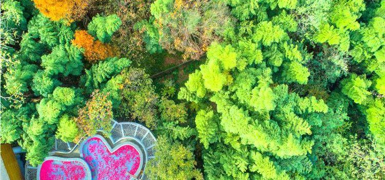 竹梢泡池區