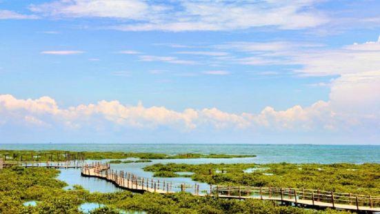 베이하이 진하이완 맹그로브 생태공원