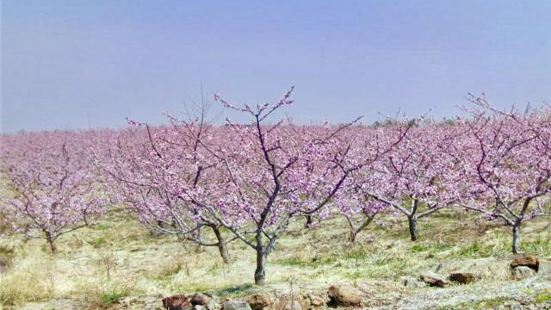 Taohua Island Scenic Area(Peach Blossom Island)